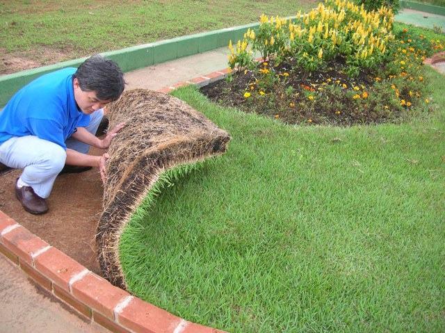 Tipos de Grama para Jardim – Grama São Carlos